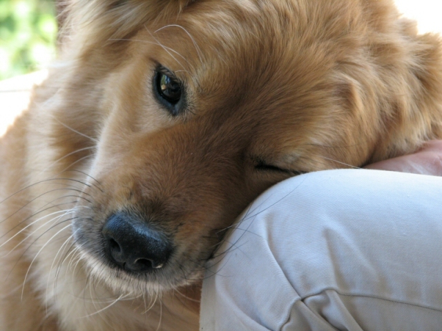 cane-amore